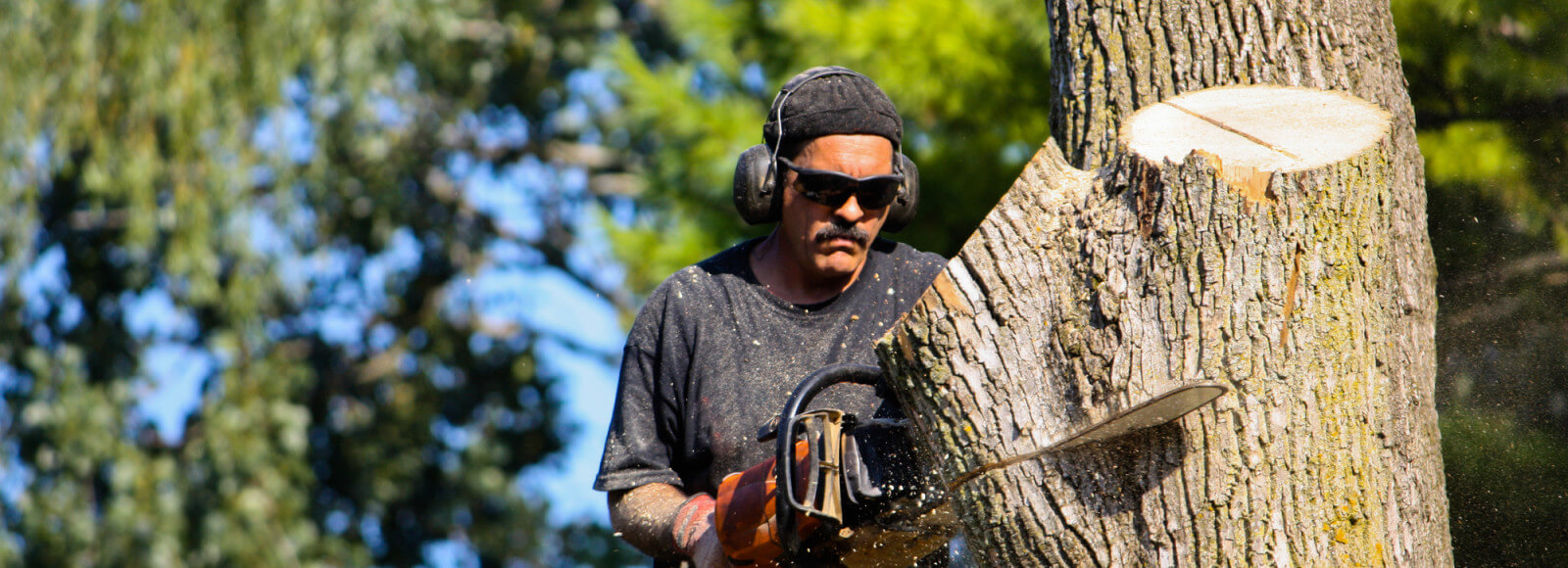 Man with a chainsaw cutting through a tree on Long Island
