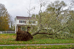 Storm Damage Fallen Tree in Need of Emergency Removal