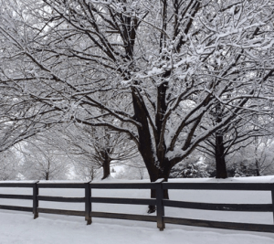 Snow and Blizzard Preparation is crucial for avoiding tree damage.